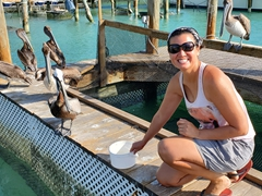 Pelicans trying to steal the fish meant for tarpons; Robbie's Marina