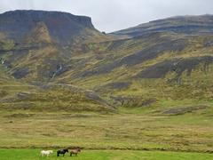 Three horses; Snæfellsnes Peninsula
