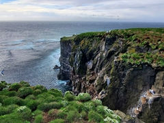 Another view of the amazing Látrabjarg Cliffs - sadly it was too windy for puffins the day we visited