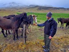 Robby making friends with horses; Vatnsnes Peninsula
