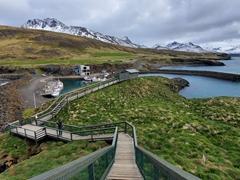 10,000 puffins nest at Borgarfjörður eystri each year. Spot their burrows in this photo (hint: the tiny mounds of dirt); Borgarfjörður eystri
