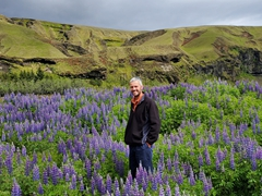 Robby in a field of lupine