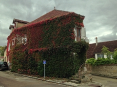 Fall colors showing up on this vine covered house in Vermenton