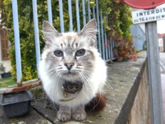 A super friendly cat poses for a photo; Châtel-Censoir