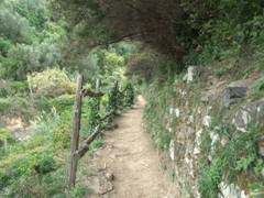 This portion of the hiking trail doesn't look so bad, does it?
