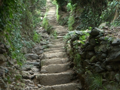 And then you get to this part of the hike, with steps leading onward and upward!
