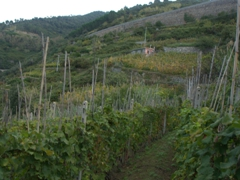 We passed lots of vineyards on our hike between the Cinque Terre