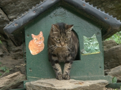 Bring cat food! Cat station where hikers are encouraged to feed the cats; trail linking Monterosso to Vernazza