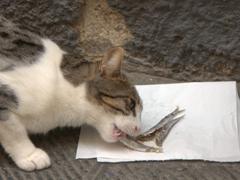 A cat feasts on leftover fish; Riomaggiore