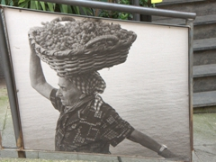 Poster of an old lady carrying a large wicker basket of grapes; Cinque Terre