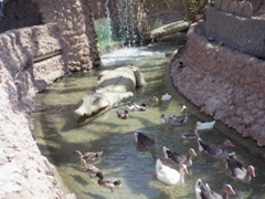 Luckily for the ducks, the crocodile is fake; Dar Cherait
