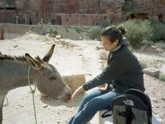 Becky feeds a hungry donkey