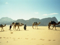 Too many camels and not enough tourists! Disgruntled cameleers go home empty handed; Wadi Rum