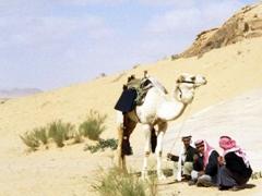 Cameleers in Wadi Rum
