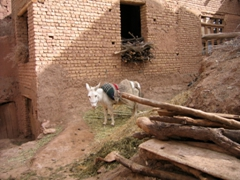 Typical village scene in Abyaneh