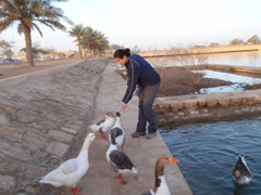 Becky feeding the Al Faw Palace geese their morning cereal; Camp Victory