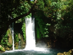 Banias Waterfall is haven for fresh water fish as swimming is strictly prohibited; Golan Heights