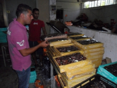 We enjoyed a free sample of some of the world's best dates at this date factory in Jericho