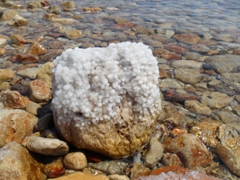 Salt crystals form on a rock in the Dead Sea, which has a salinity of 31%, making it nine times higher than the oceans
