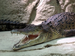 Steer clear from the crocodile at Science Center's Aquarium!