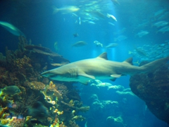 We joined a throng of mesmerized visitors gazing at the shark tank