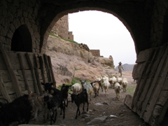 Animal stampede, Bayt Baws