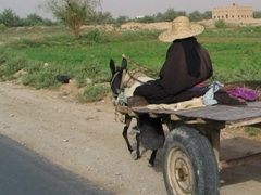 Woman farmer (dressed in black from head to toe) on her way to work