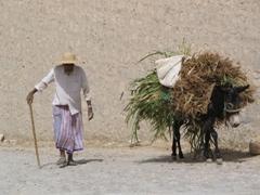 Donkey transport, Al-Hajarain