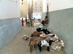 A typical scene in laid-back Shibam