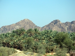 Driving past the Oasis of Dhaid