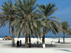 Two women clad in black abayas seek refuge from the midday sun underneath a palm tree; Sharjah