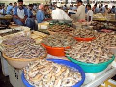 Buckets of shrimp sold by the KG; Dubai fish market