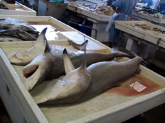 Fresh shark for sale at the Dubai Fish Market