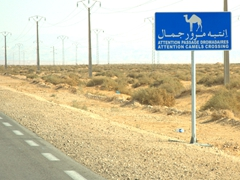 Camel crossing signpost