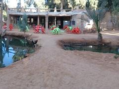 Hot springs at Ksar Ghilane