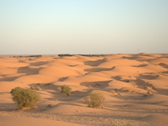 Sand dunes of Ksar Ghilane
