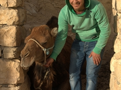 Ali, our Chenini guide, shows us the camel responsible for grinding up the village's olives