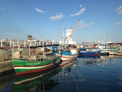 Colorful fishing boats in Sousse harbor