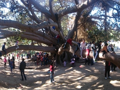 Tunisian kids playing on a massive tree at Belvedere Park