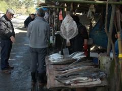 Roadside stop for fish (enroute to Batumi)