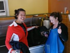 Becky and Becca give Duke a bath at Laundramutt; Boston, MA