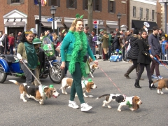 Even the canines dressed up for the St Patrick's Day parade; Alexandria, VA