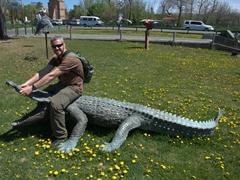 Robby wrestling a crocodile; Yerevan