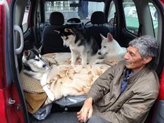 Huskies for sale at Vernissage Market